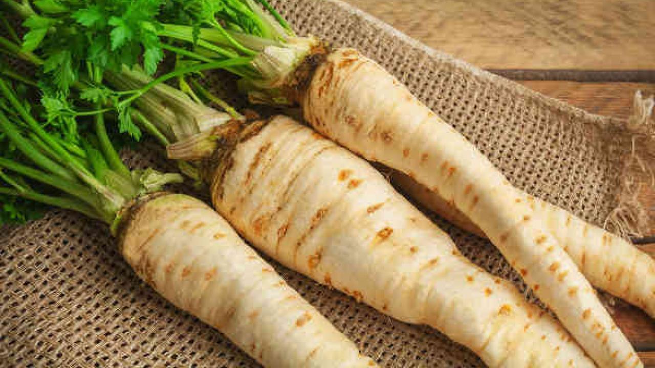 Récolter les graines de légumes : panais | Potager et jardin